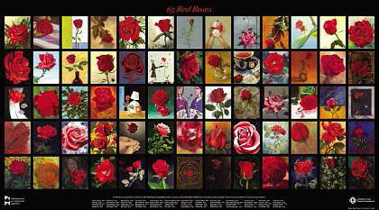 65 Red Roses, the legacy of Eva Markvoort